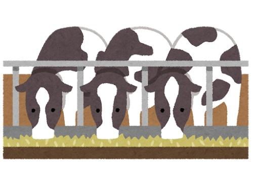 牛3頭のイラスト