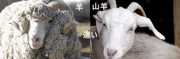 羊とヤギの違い